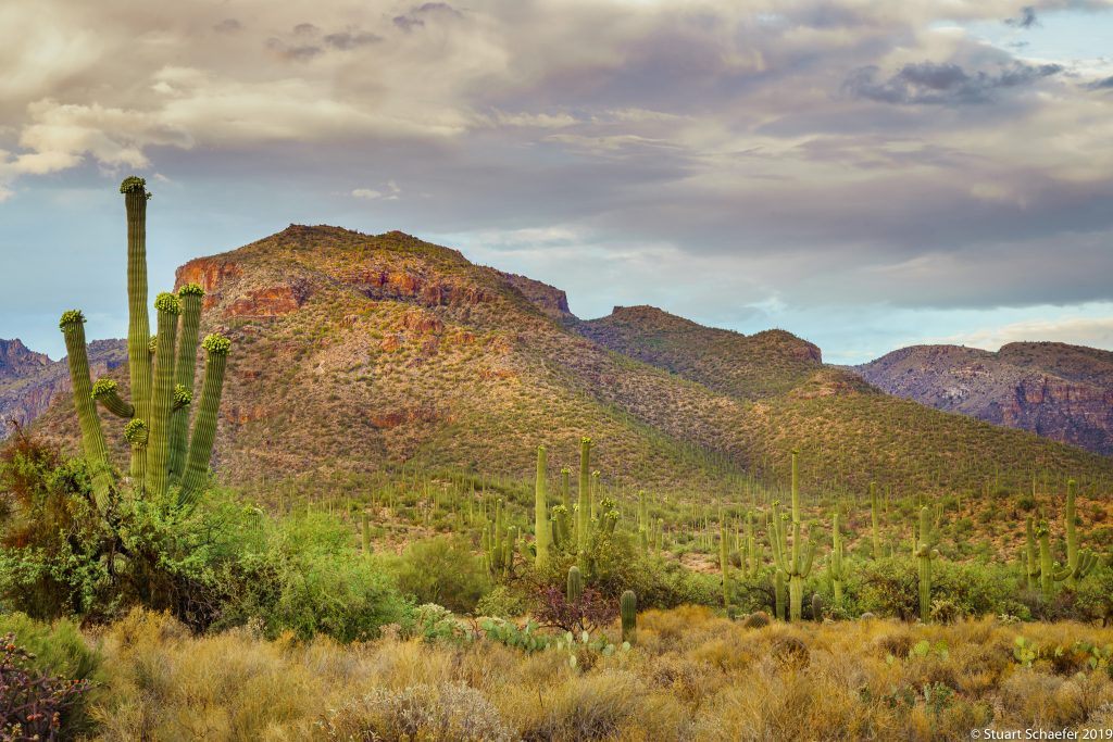 Mountains Of Sabino Canyon